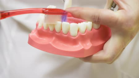 escova de dentes : Dentist using jaw mock and toothbrush to teach patient correct cleaning of teeth, 4k, slow motion