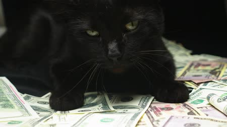 ganancioso : Dollar and a black cat