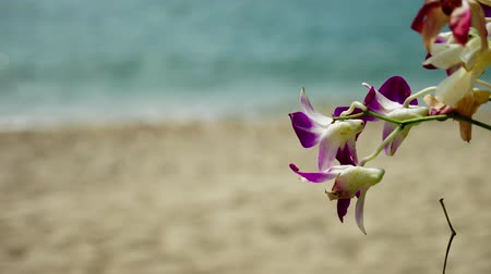 vzdálený : closeup of orchid flowers on the background of the sea shore