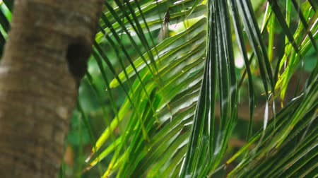 srážky : close-up. Tropical rain, season of precipitation. Rain on the background of palm leaves. Dostupné videozáznamy