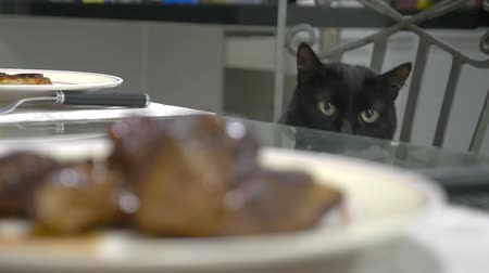tlapky : black cat watching a piece of meat on the kitchen table.
