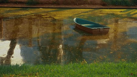drewno : abandoned boat among the river overgrown with duckweed. sunny summer day