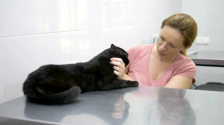 darovat : veterinary concept. black cat in a carrier for animals in a veterinary clinic Dostupné videozáznamy