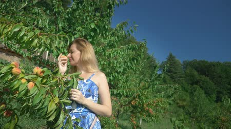 meruňka : A happy blond girl is picking a fresh peach from a peach tree in the garden and sniffing it.
