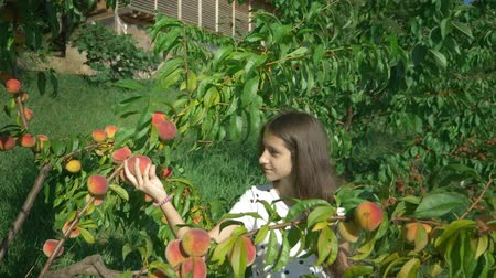 morele : Happy brunette girl picks a fresh peach from a peach tree in the garden and sniffs it. Wideo