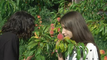 morele : Happy brother and sister enjoy the scent of fresh peaches from a peach tree in the garden. Wideo