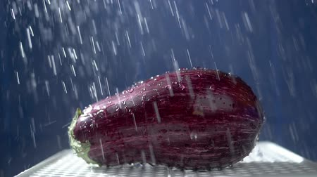 ギニア : beautiful eggplant on a dark background in the studio under the streams of rain.