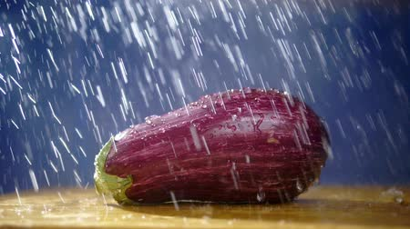 patlıcan : beautiful eggplant on a dark background in the studio under the streams of rain.