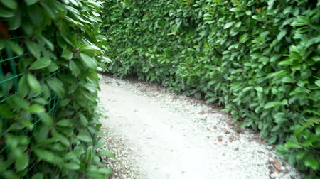 quest : go through the maze in the park. A maze of bushes with fresh green foliage in a sunny day in summer. first-person view. Stock Footage