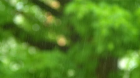 torrente : natural background. Close-up of a raindrop on a blurry background of green foliage. summer rain.
