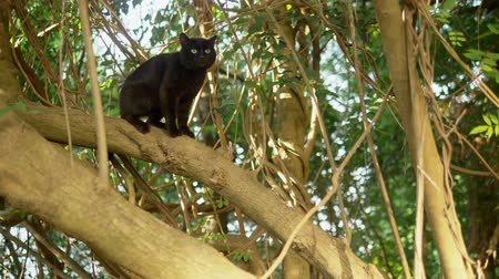 猫 : Beautiful black cat on a tree with creepers.