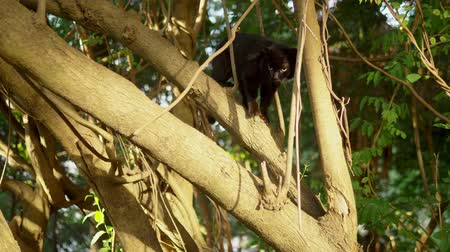 liaan : Beautiful black cat on a tree with creepers.
