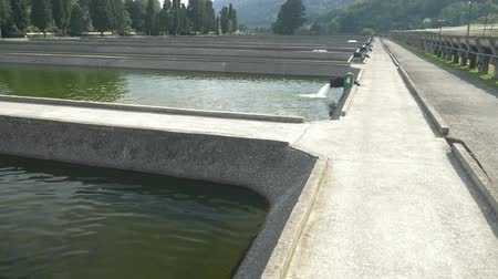 truta : pools with fish on a trout farm, fish farm concept.