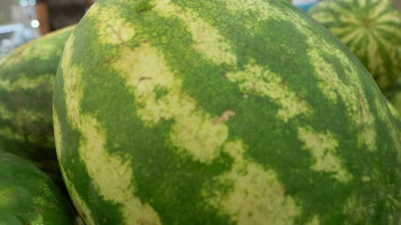 мускусная дыня : Stylish beautiful background of fresh melons. Fresh autumn harvest of melons. Harvest Стоковые видеозаписи