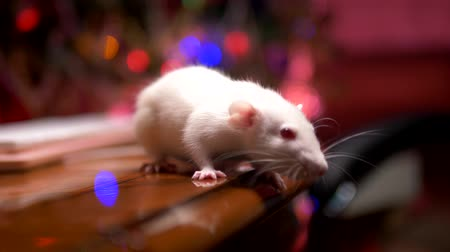 esplendor : white rat and pink pc keyboard on the background of blurred illumination of a christmas tree. close-up. symbol of 2020. copy space Stock Footage