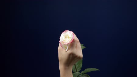совращение : womans hands caress a pink rose against a dark background. copy space