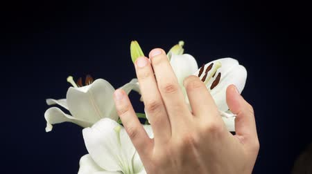 誘惑する : male hands caress a white lily on a dark background. copy space 動画素材
