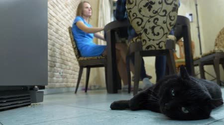 ronronar : cat lying on the floor in the kitchen next to the owners who eat at the table Vídeos