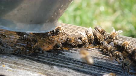 The bee drinks water in the spring season. Animals and water.