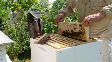 колония : Beekeeper inspecting honeycomb frame at apiary at the summer day. Man working in apiary. Natural fresh honey. The concept of organic food. Slow-motion video.