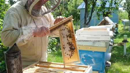 polinização : Beekeeper inspecting honeycomb frame at apiary at the summer day. Man working in apiary. Natural fresh honey. The concept of organic food. Slow-motion video.