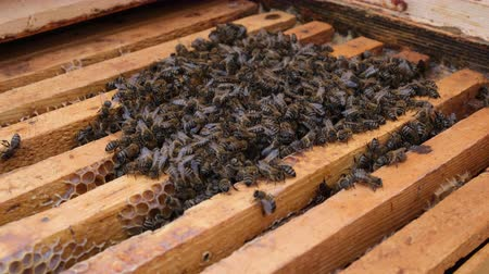 улей : How bees winter in the hive. Overview of bee hive in winter. Wintering bees. Стоковые видеозаписи