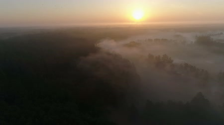 Drone footage above the fog and trees birds passing by