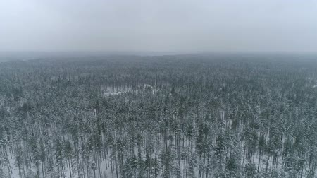 Drone footage above the woods in winter