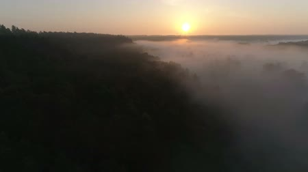 Sunrise Drone footage above the fog and trees Stok Video