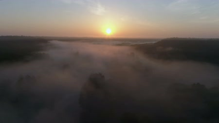 Sunrise Drone footage above the fog river trees in fall