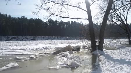 Drone slowly flyes from shore to Frozen River through the trees. Close up