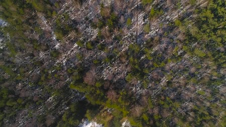 Overhead drone look Through Trees To Swamp in winter with boardwalk