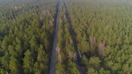 Panoramic Flight over the road between forests. Trees in the middle two roads