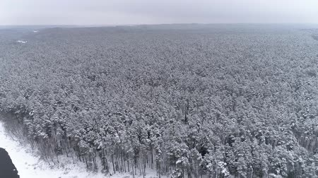 Drone footage in winter. Winter landscape in the forest. Stok Video