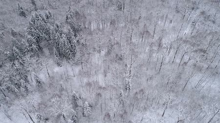 Drone footage. Winter landscape in the forest. Stok Video