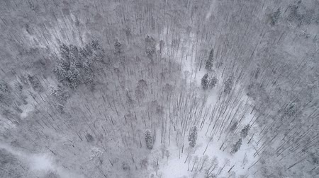 Drone overhead footage. Winter landscape in the forest.