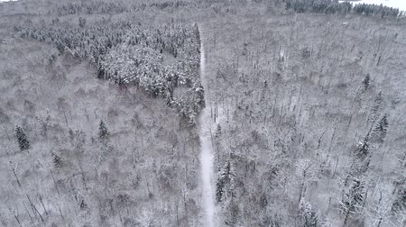 Amazing drone overhead footage. Winter landscape in the forest.
