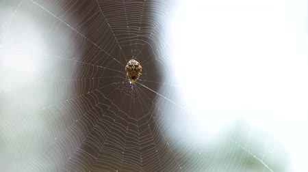změť : Spider in a web waiting for his victim