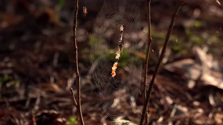 intricacy : Mystical spider web