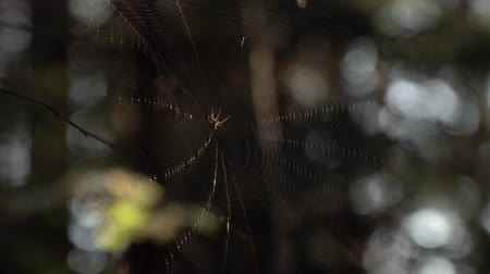 intricacy : Spider web in the wind. Close up.