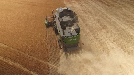 Combine harvester removes gold wheat. Top view, drone 4k