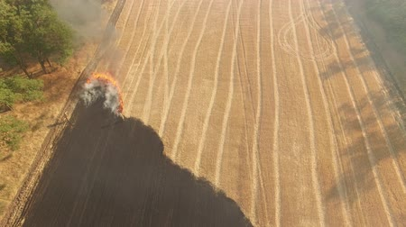 Big fire on the large wheat field