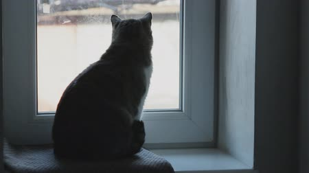 kotki : Cat at the window