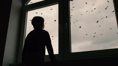 előérzet : boy standing at window and looks at a pack of ravens that is spinning in the sky Stock mozgókép