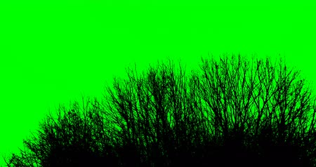 jardim : Silhouette of tree branches on a green background