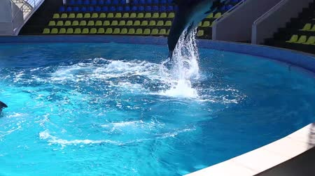 whale : Jumping dolphin in the pool.