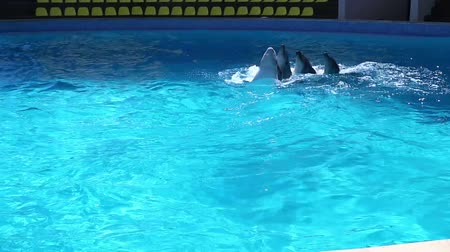 yunus : Dolphin dance in a circle. Family of dolphins dances team. Stok Video