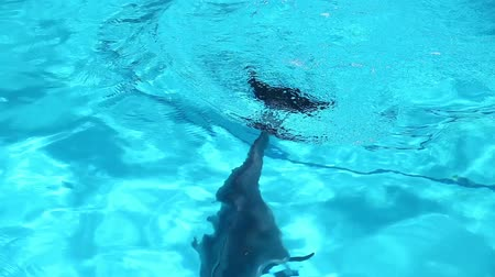 wieloryb : Dolphin dived into the depths. Wideo