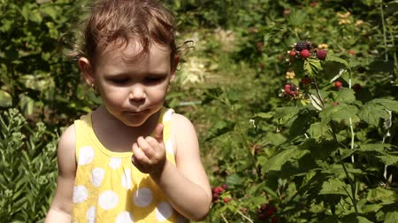 amoras : Little girl in the garden eating blackberries. Stock Footage