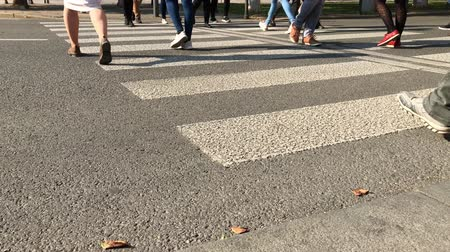 панда : Pedestrians cross over road by zebra crossing in city at sunny autumn day. Pedestrian foot  thwart the road on green light. People step across a road by crosswalk. Crowded panda crossing with citizens Стоковые видеозаписи